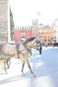 horse & carriage Sevilla